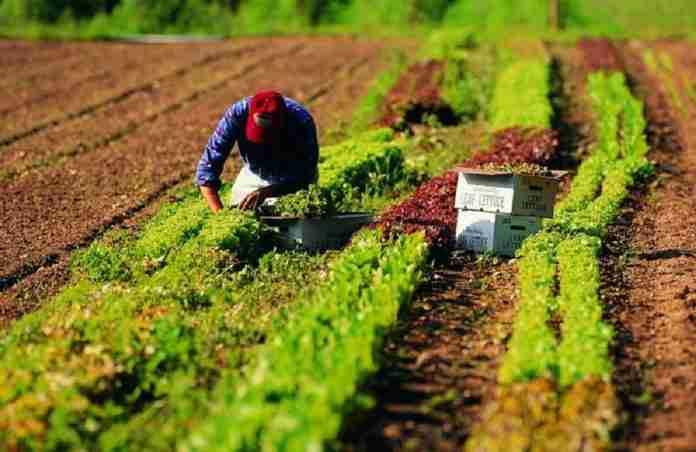 Lavoro nei campi (foto di Cgil Sicilia)