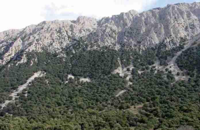 Foto del sistema informativo forestale regionale